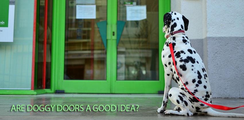 Are Doggy Doors A Good Idea